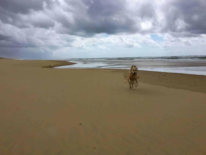 l'Especier plage, landes beaches