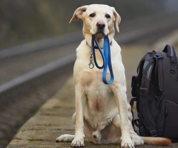 Moving pets overseas. Moving Dogs internationally.