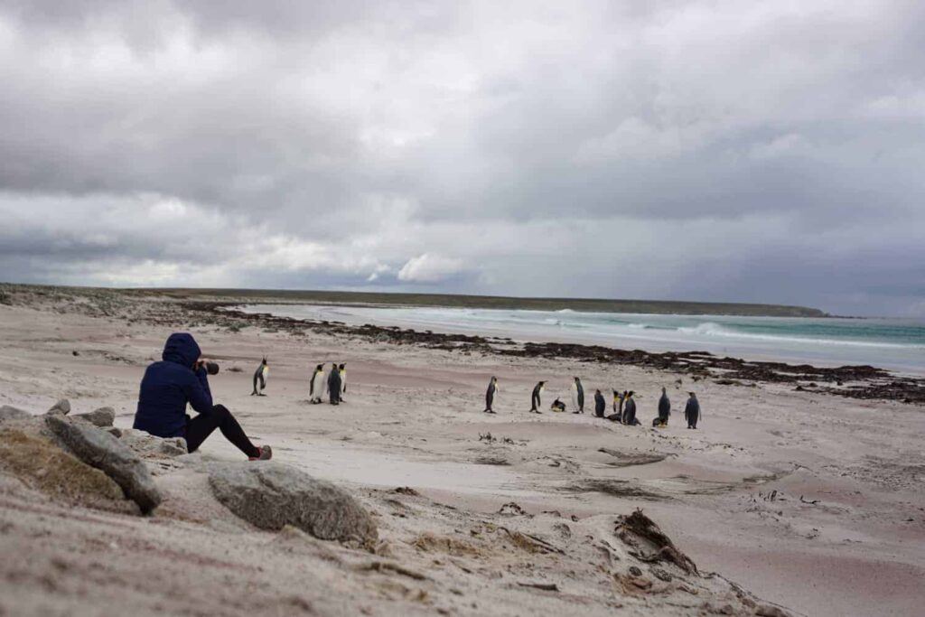 Visiting the Falkland Islands. Le Long Weekend - 2017 in Review