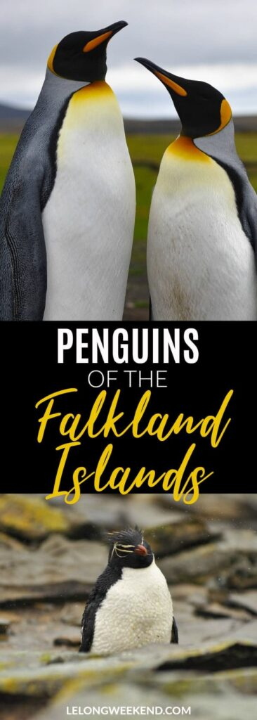If you love wildlife encounters you can't go past the Falkland Islands as a destination. Home to over a million penguins and 5 different species, you won't be disappointed! Penguins | Wildlife Encounters | Ethical Wildlife Encounters | Falkland Islands | Falklands | Wildlife Destinations | Where to see Penguins in the Wild #penguins #wildlife #birds #falklandislands
