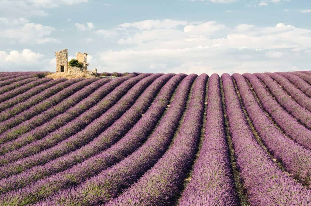 Lavender tour from Aix-en-Provence