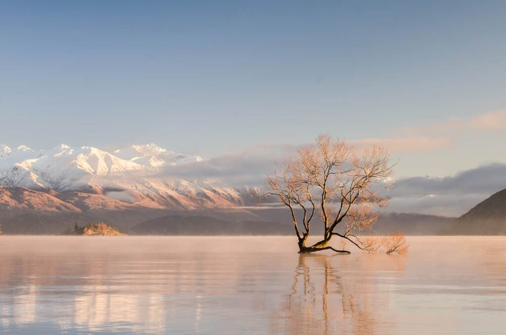 That Wanaka Tree, one of the best things to do in New Zealand
