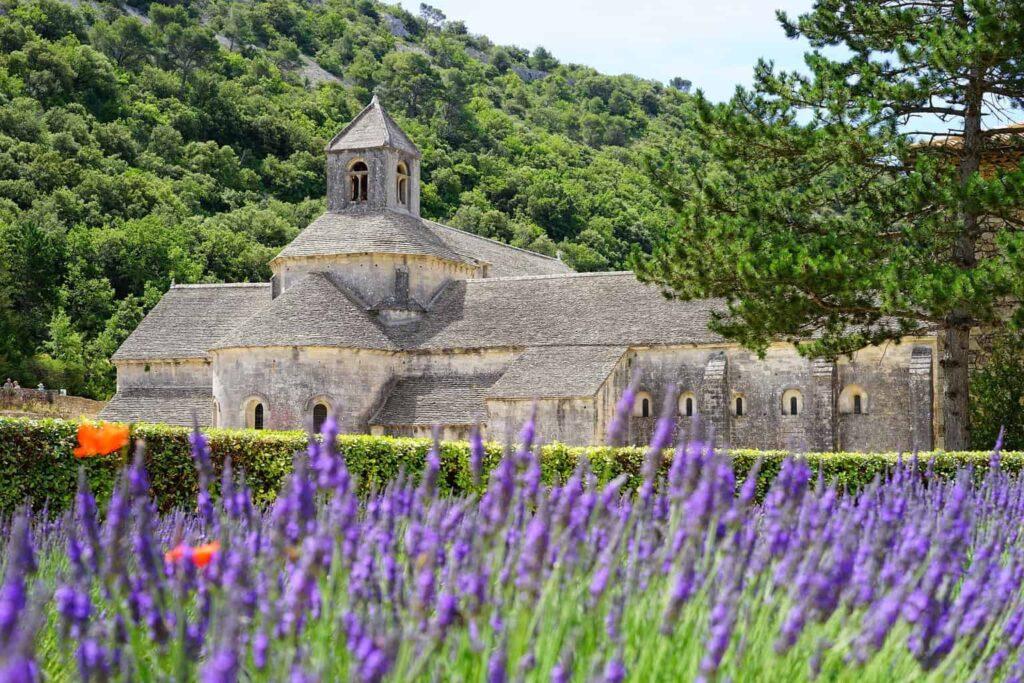 Luberon Lavender Fields.