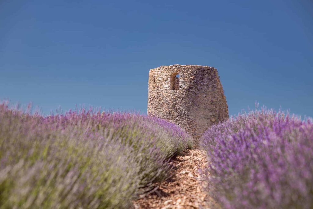 The Best Lavender Fields of Provence, France - Updated for 2019!