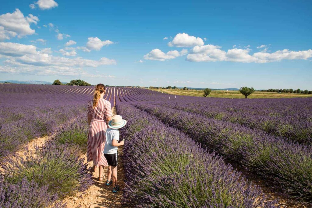 Valensole Plateau lavender fields, France