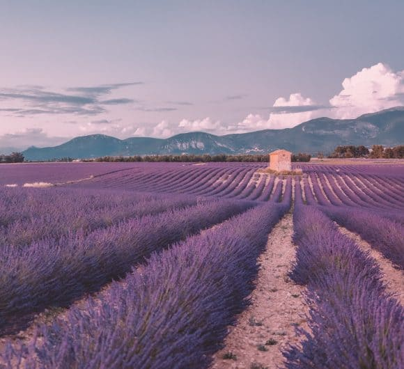 Ultimate Guide to the Best Lavender Fields in Provence, France