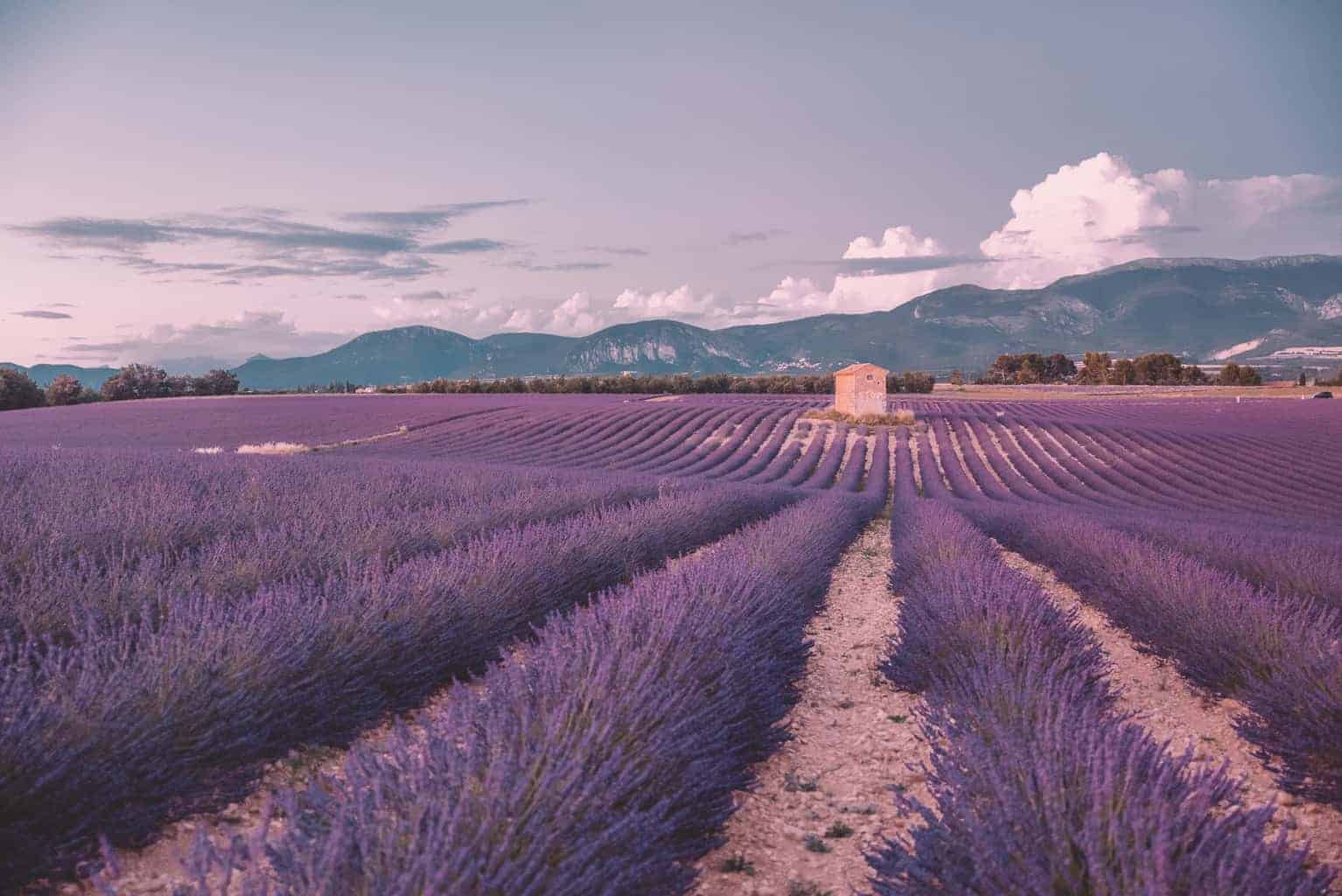 Where to Find the Best Lavender Fields of Provence France