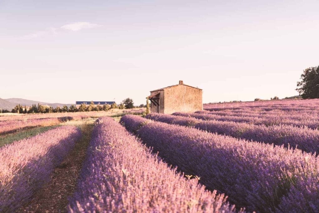 Life in France update - Provence