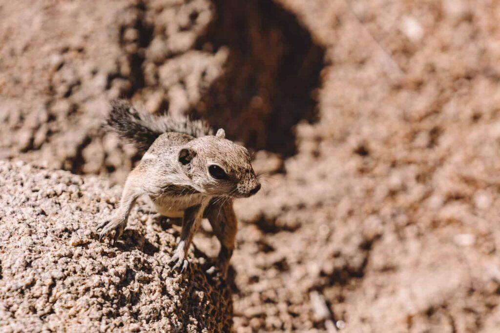 Animals of Joshua Tree National Park