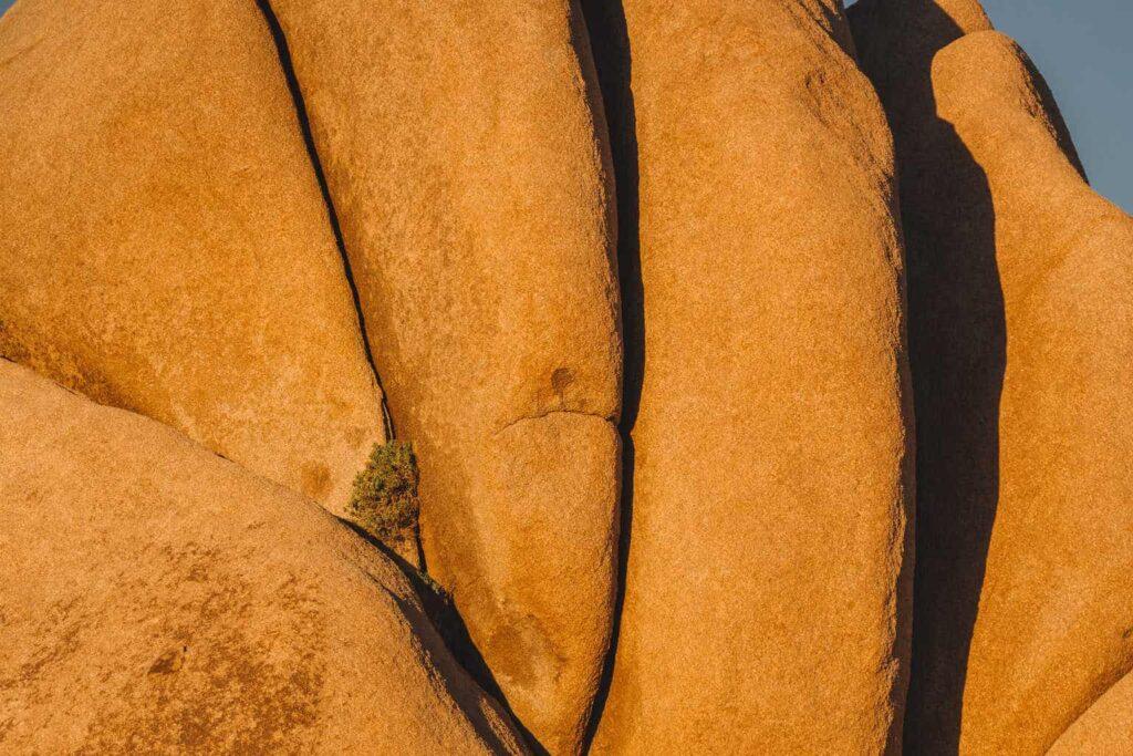 Jumbo Rocks, Joshua Tree National Park