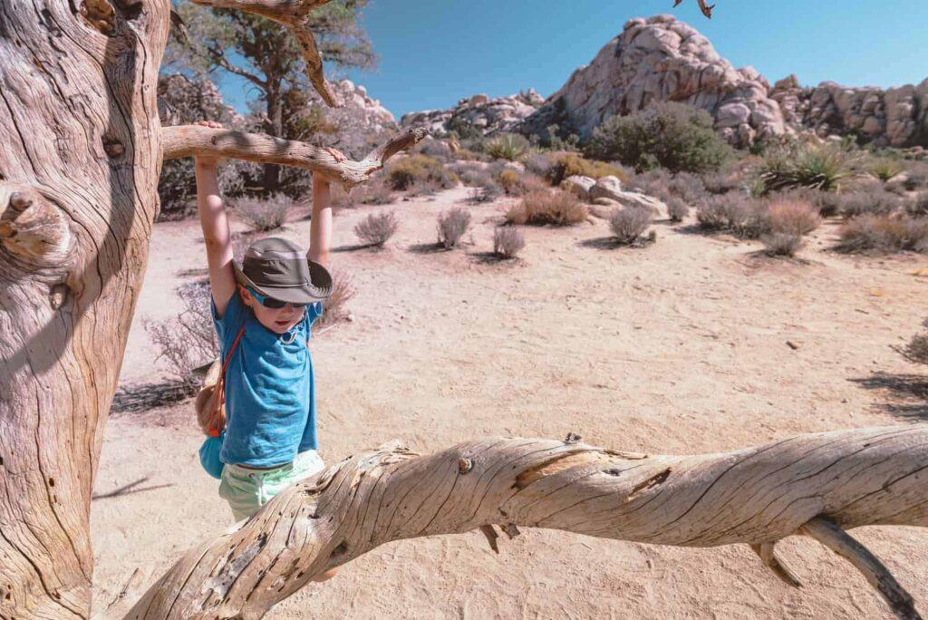 Exploring Joshua Tree with Kids