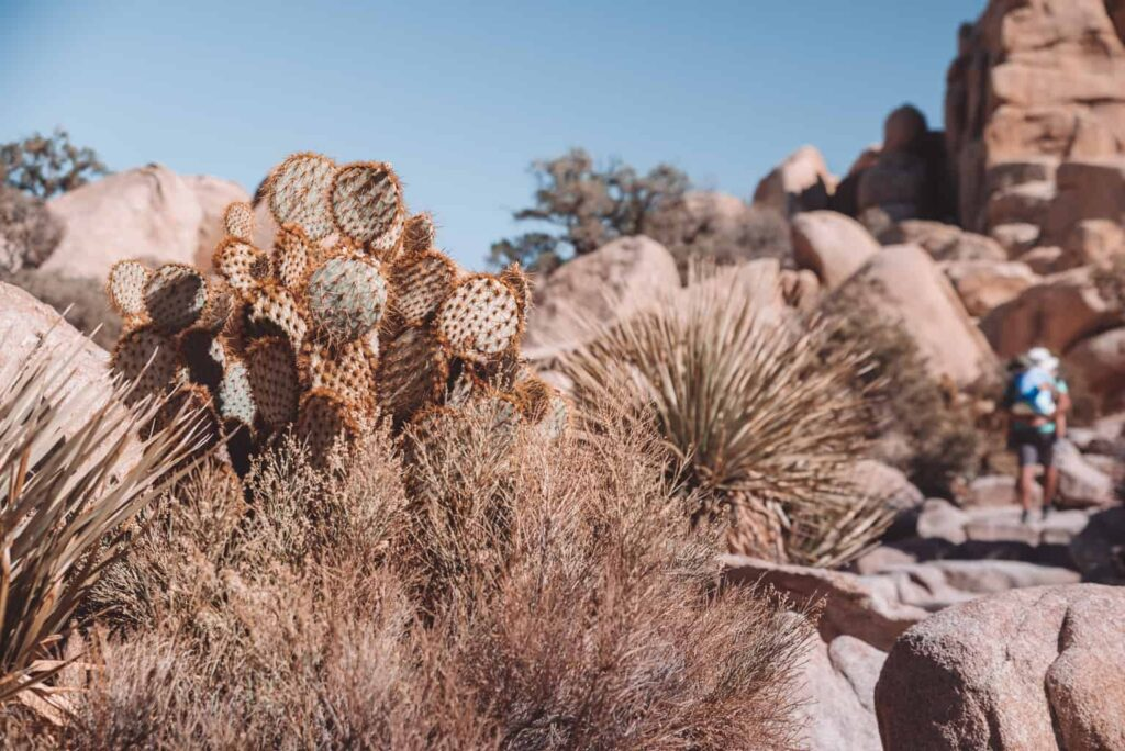 Best hikes in the Joshua tree national park with kids