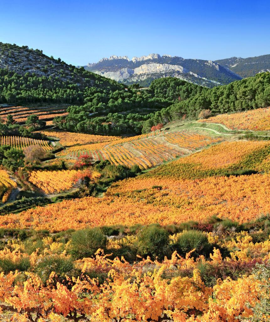 Vineyards near Carpentras in Provence, France
