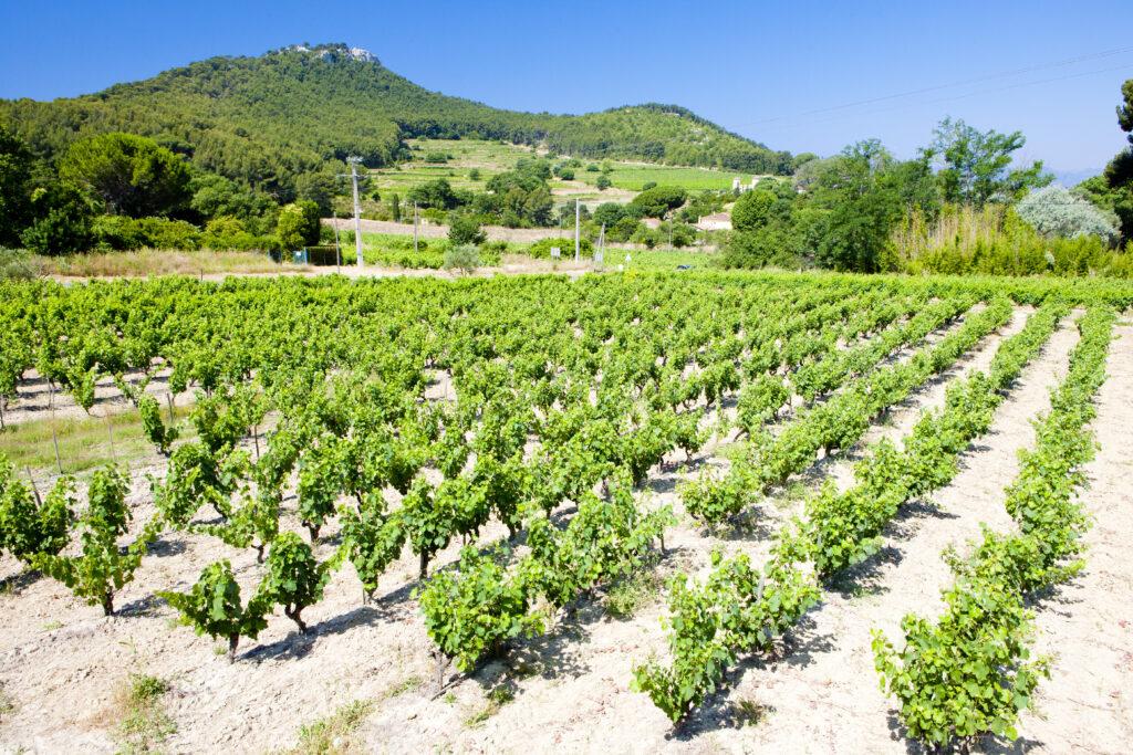 Bandol wine region in Provence