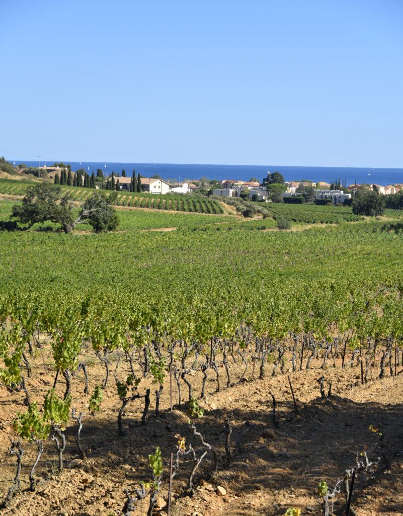 La Londe - Provence Wine Region