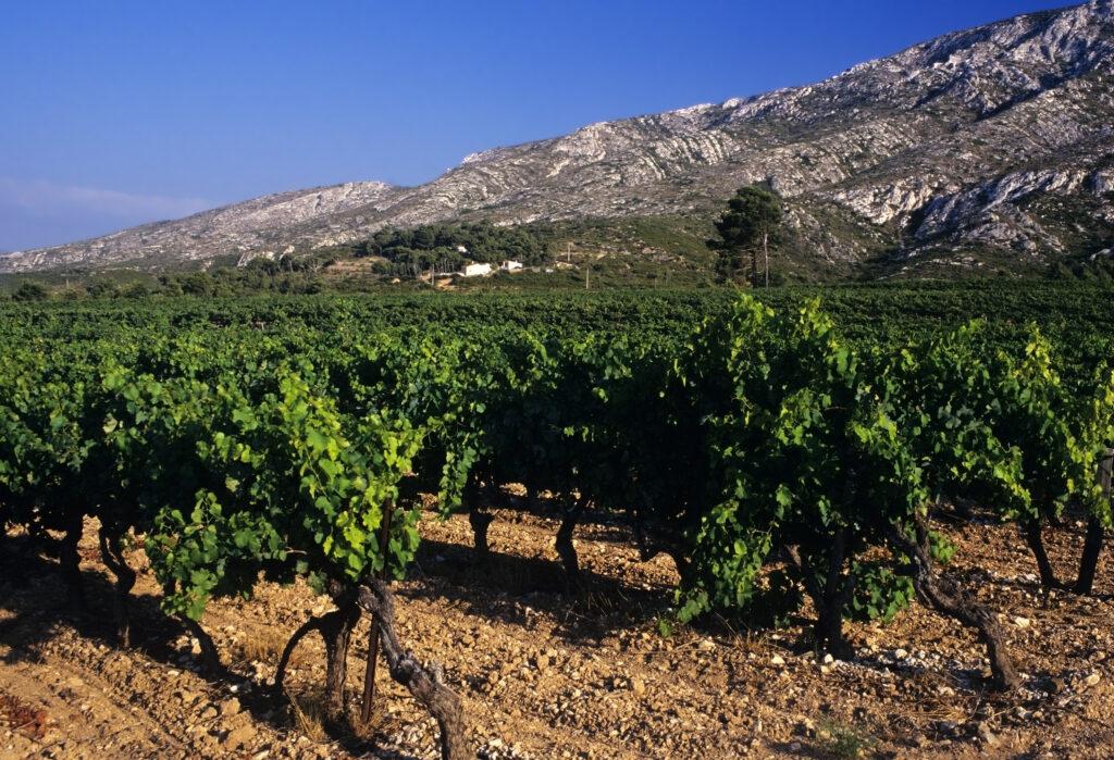 Pellet region vineyards in the South of France