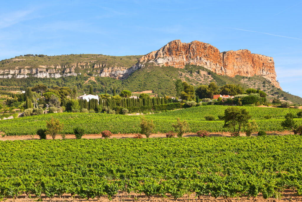 Vineyards near big Cap Canaille. Cassis, France.